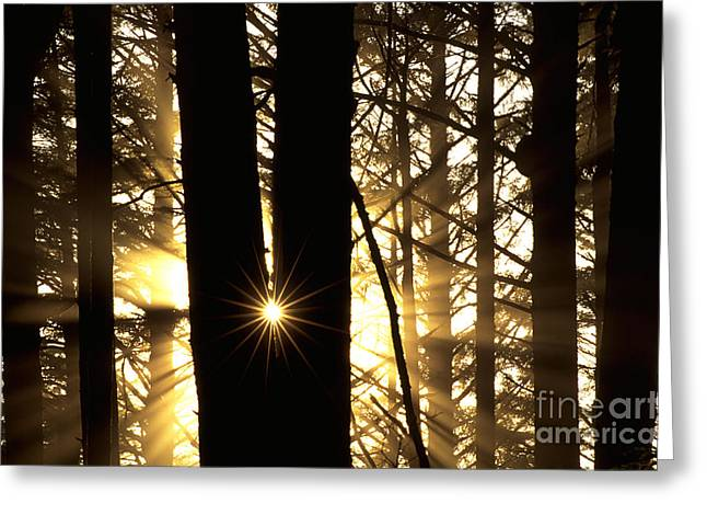 Coastal Forest Greeting Cards - Coastal Forest Greeting Card by Art Wolfe
