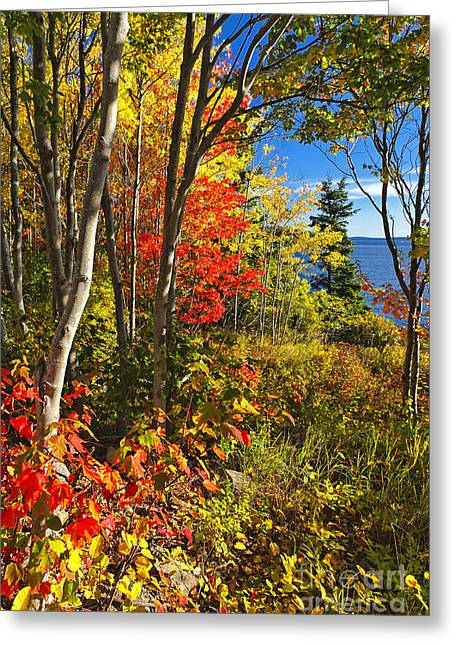 Coastal Forest Greeting Cards - Coastal Forest Autumn Scenic Greeting Card by George Oze