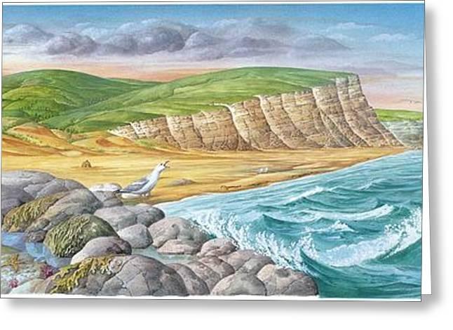 Flying Seagull Greeting Cards - Coastal Geography, Artwork Greeting Card by Gary Hincks