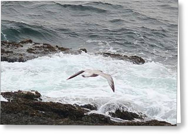 Flying Seagull Greeting Cards - Coastal Maine 10 Greeting Card by Susan Feeley