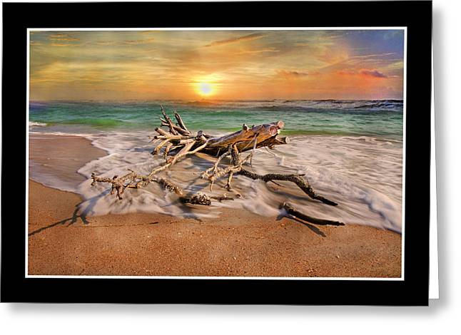 Coastal Morning  Greeting Card by Betsy C Knapp