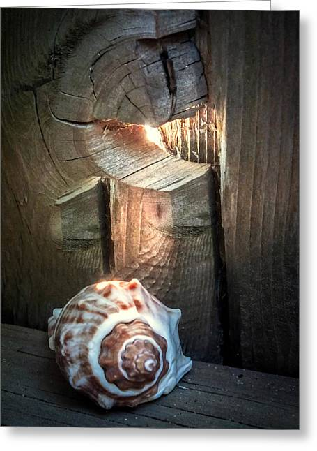 Spotted Shells Greeting Cards - Coastal Morning Light Greeting Card by Karen Wiles