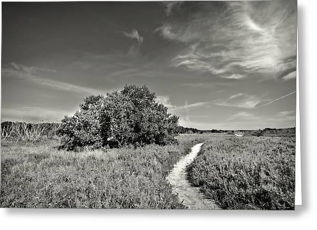 Prairie Heritage Site Greeting Cards - Coastal Prairy BW Greeting Card by Rudy Umans