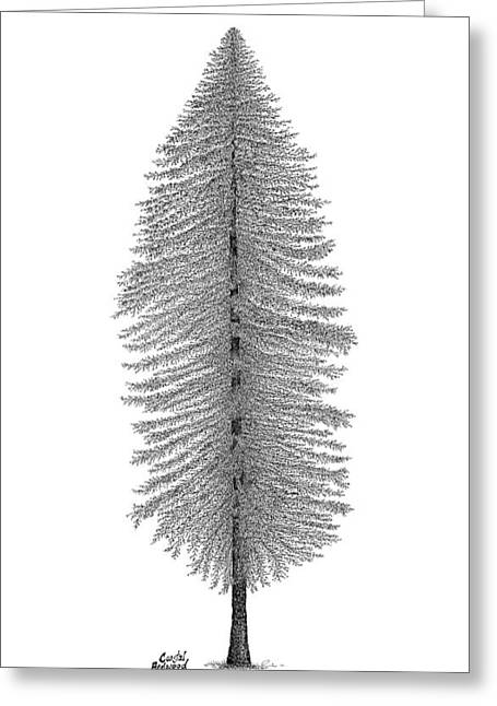 British Columbia Drawings Greeting Cards - Coastal Redwood Greeting Card by Andrea Currie