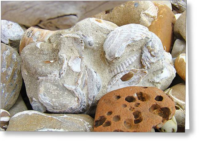 Agate Beach Greeting Cards - Coastal Shell Fossil Art Prints Rocks Beach Greeting Card by Baslee Troutman