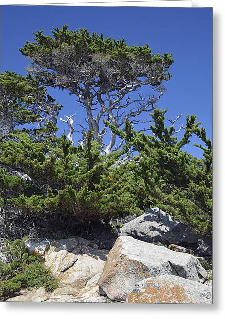 Point Lobos Reserve Greeting Cards - Coastal Trees in Californias Point Lobos State Natural Reserve Greeting Card by Bruce Gourley