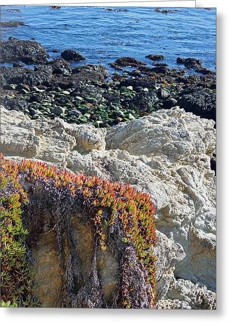 Big Sur California Greeting Cards - Coastal View - Ice Plant Greeting Card by Suzanne Gaff