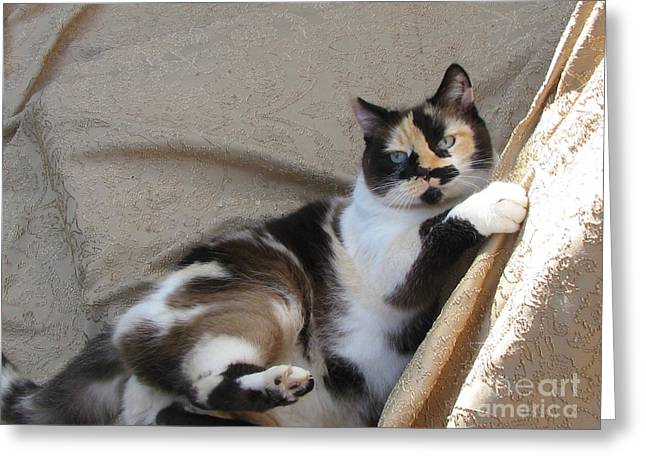 Photo Of Calico Cat Greeting Cards - Coat of Many Colors  SilkTapestryCatsTM Greeting Card by Pamela Benham