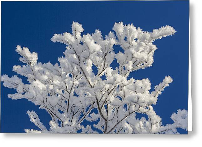 Willow Lake Greeting Cards - Coated in Feathers of Ice Greeting Card by Tim Grams