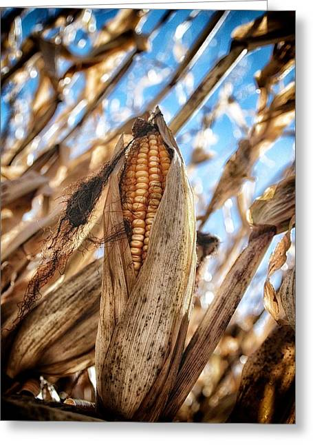 Agronomy Greeting Cards - Cob Greeting Card by Todd and candice Dailey