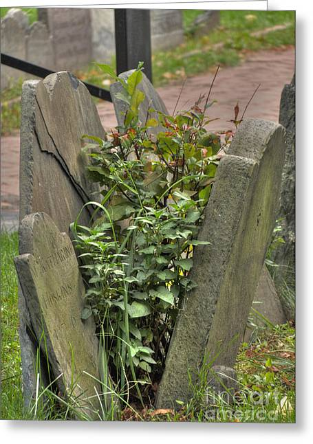 Cobbs Hill Greeting Cards - Cobbs Hill Burial Ground 4 Greeting Card by Deborah Smolinske