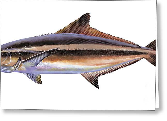 Bonefish Greeting Cards - Cobia Greeting Card by Carey Chen