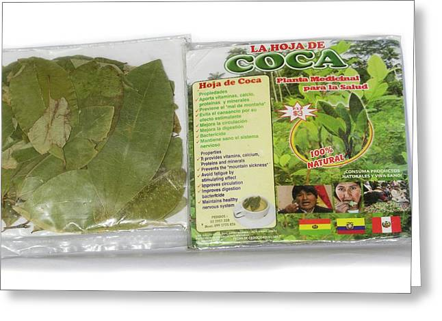 Coca Leaves From Peru Greeting Card by Dr Morley Read