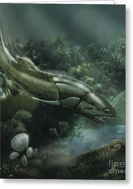 Zoology Digital Art Greeting Cards - Coccosteus Of The Devonian Period Greeting Card by Jan Sovak