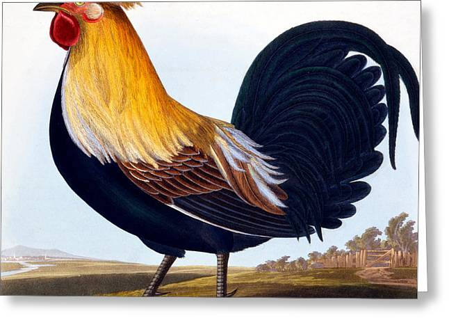 Bird Feet Greeting Cards - Cock Greeting Card by CLE Perrott