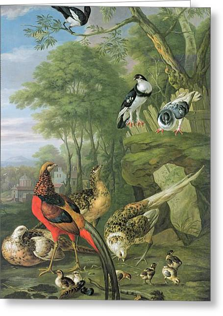 Calm Paintings Greeting Cards - Cock pheasant hen pheasant and chicks and other birds in a classical landscape Greeting Card by Pieter Casteels