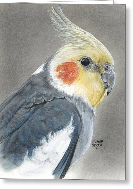 Pet Portraits Pastels Greeting Cards - Cockatiel Greeting Card by Heather Gessell