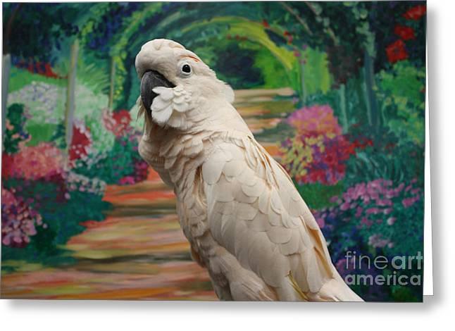 Art In Acrylic Greeting Cards - Cockatoo  Greeting Card by John Telfer