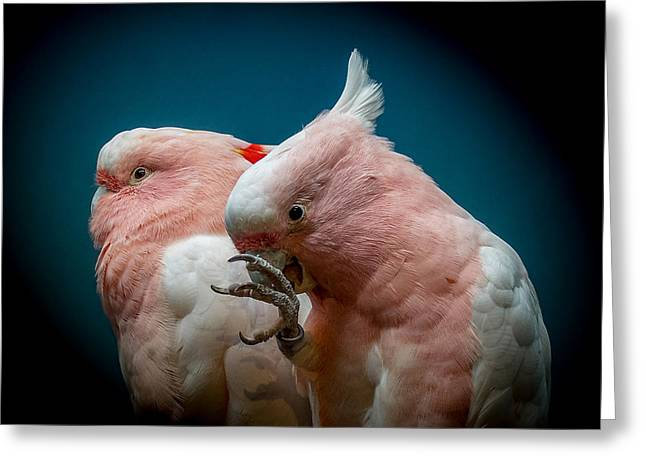 Cockatoos Greeting Card by Ernie Echols