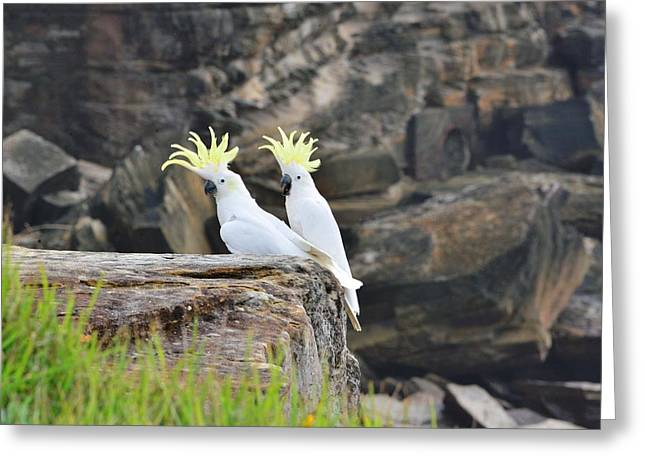 Pretty Cockatoo Greeting Cards - Cockatoos Greeting Card by FL collection