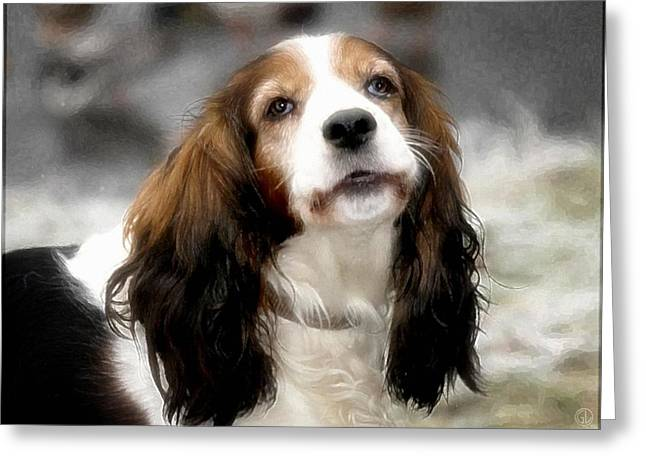 Spaniel Digital Art Greeting Cards - Cocker lady Greeting Card by Gun Legler