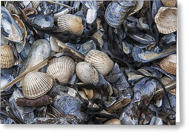 Cockles And Mussels Greeting Card by Karen Appleyard