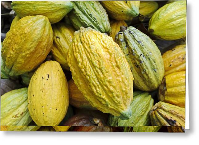 Land Use Greeting Cards - Cocoa plantation, Indonesia Greeting Card by Science Photo Library