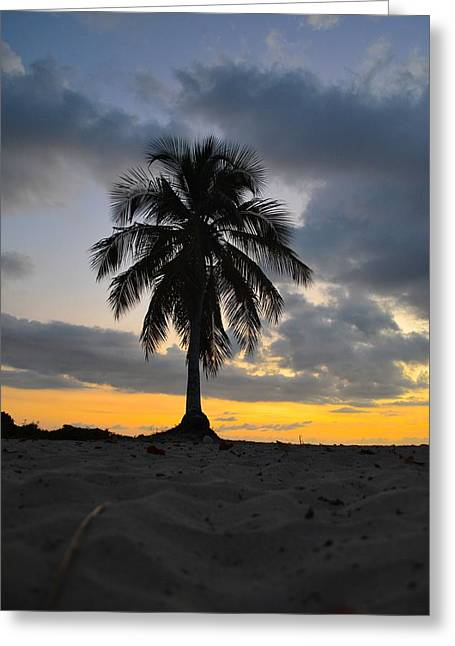 Moon Beach Pyrography Greeting Cards - Coconut Beach Greeting Card by Andrei Rochester