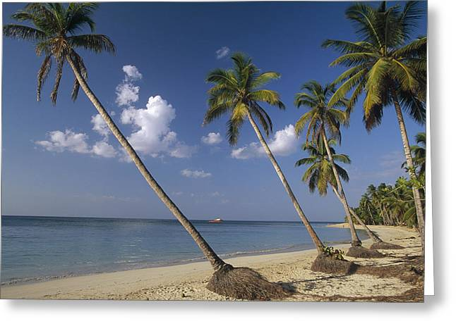 Hispaniola Greeting Cards - Coconut Palms And Beach Dominican Greeting Card by Konrad Wothe