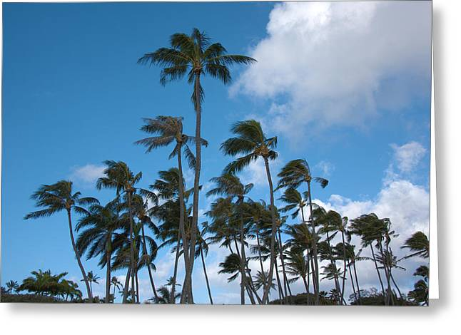 Brianharig Greeting Cards - Coconut Palms - Oahu Hawaii Greeting Card by Brian Harig