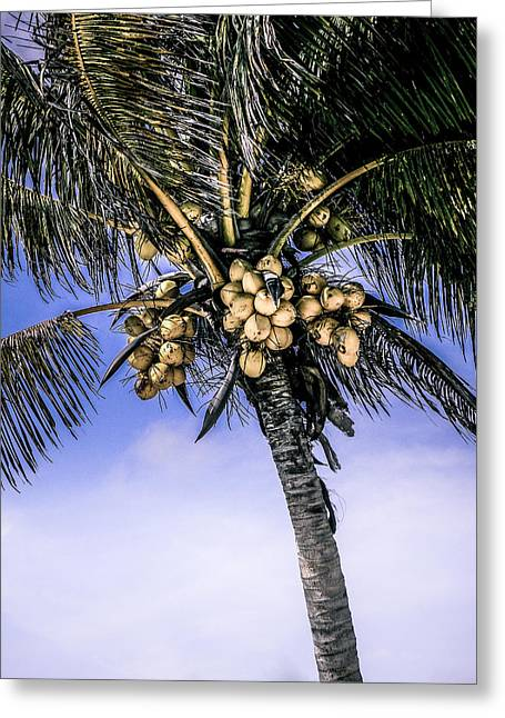 Milk Day Greeting Cards - Coconut Tree Greeting Card by Julie Palencia
