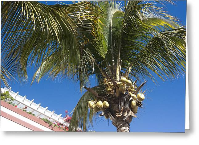 Tyree Greeting Cards - Coconut tree Greeting Card by Peter Lloyd