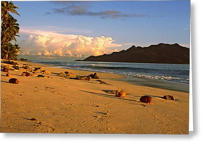 Panoramic Ocean Greeting Cards - Coconuts On A Palm Lined Beach On North Greeting Card by Panoramic Images