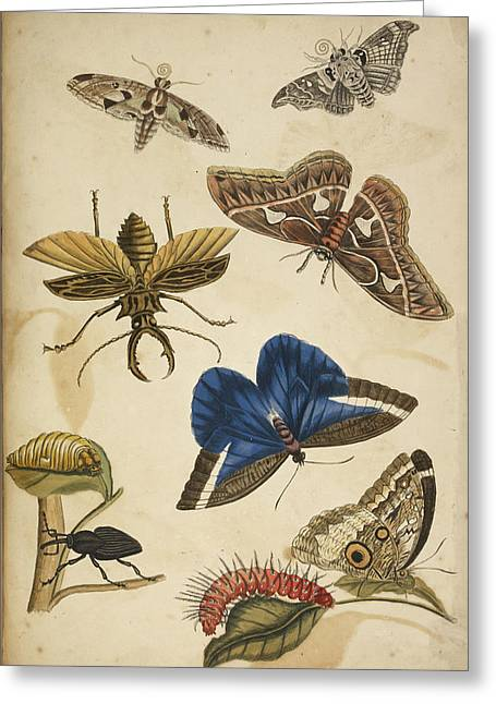 Cocoon Greeting Card by British Library