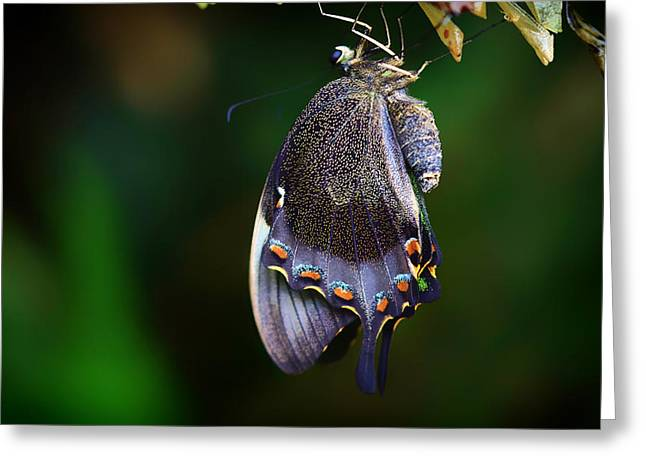 Cocoons Greeting Cards - Cocoon Fresh Greeting Card by Mountain Dreams