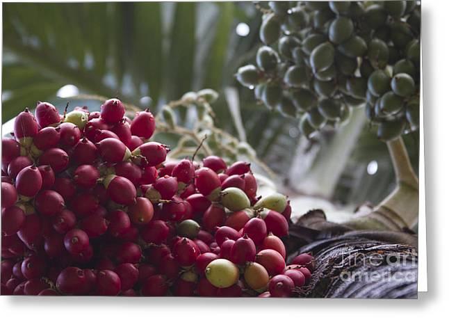 Fruit Tree Art Print Greeting Cards - Cocos Nucifera - Niu mikihilina - Palma - Niu - Arecaceae -  Palmae Greeting Card by Sharon Mau