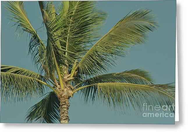 Niu Greeting Cards - Cocos nucifera - Niu - Palma - Poolenalena Beach Maui Hawaii Greeting Card by Sharon Mau