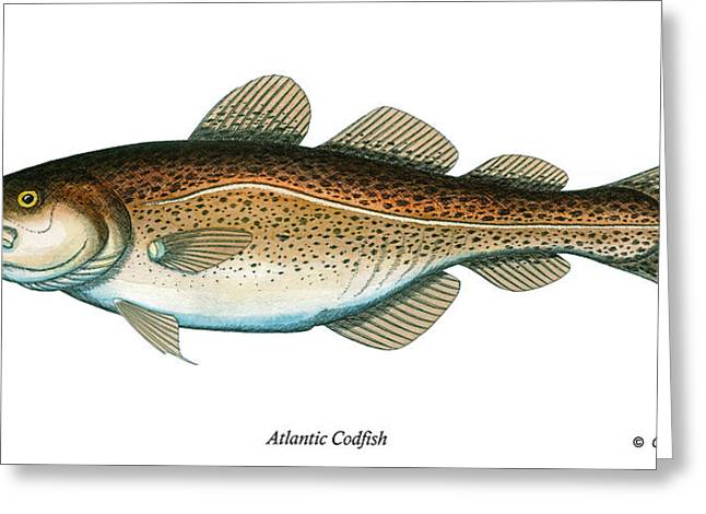 Fishing Rods Mixed Media Greeting Cards - Codfish Greeting Card by Charles Harden