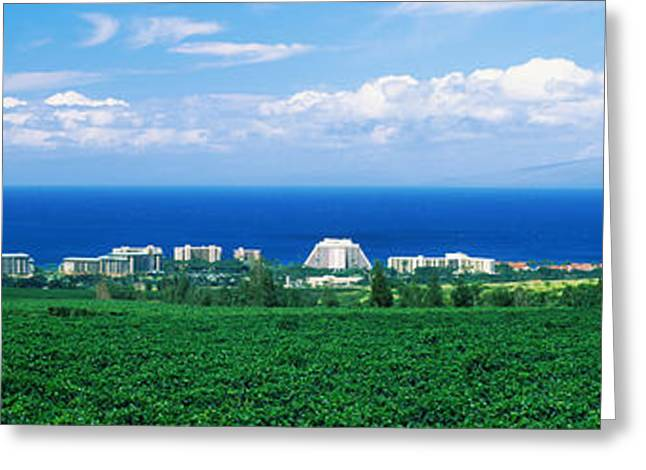 Ocean Photography Greeting Cards - Coffee Field At The Oceanside, Maui Greeting Card by Panoramic Images