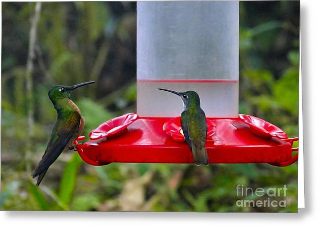Hovering Greeting Cards - Coffee Klatch In Mindo Greeting Card by Al Bourassa