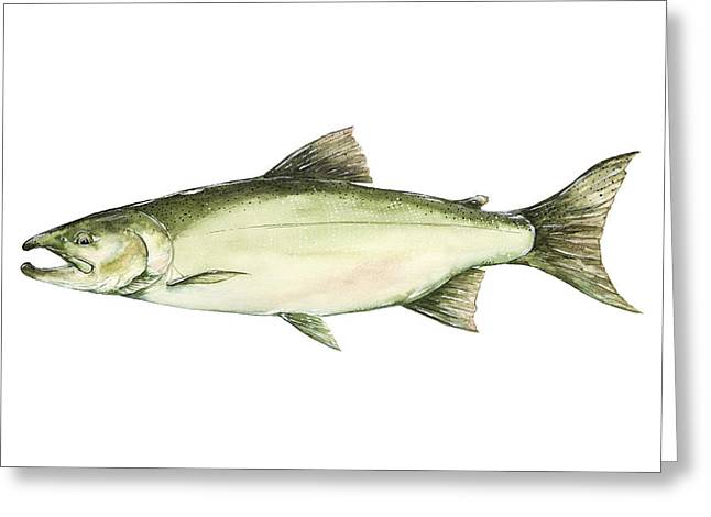 Brown Trout Greeting Cards - Coho Salmon Greeting Card by Joel DeJong