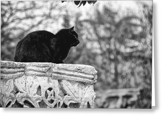 Photos Of Cats Photographs Greeting Cards - Coincidence Greeting Card by Taylan Soyturk