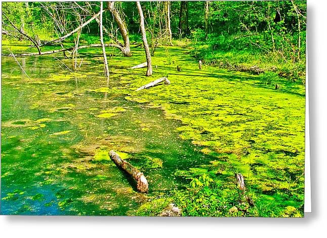 Natchez Trace Parkway Greeting Cards - Colbert Creek along Rock Spring Trail on Natchez Trace Parkway-Alabama  Greeting Card by Ruth Hager