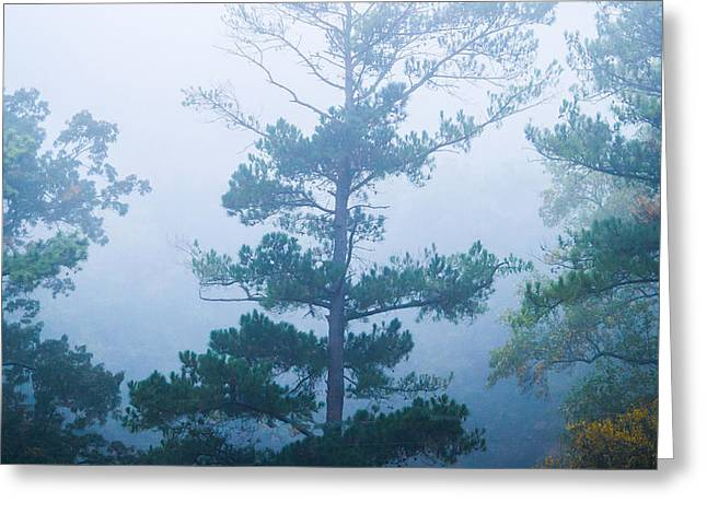 Thick Fog Greeting Cards - Cold and Mysterious Greeting Card by Shelby  Young