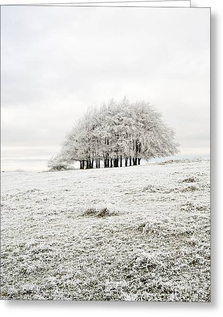 Wintry Greeting Cards - Cold Greeting Card by Anne Gilbert