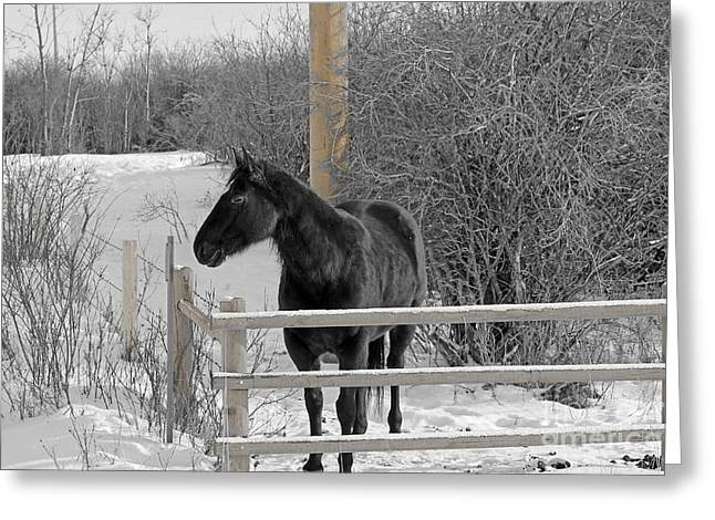 Winter Photos Greeting Cards - Cold But Hardy Greeting Card by Al Bourassa