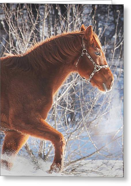 Horse Photographs Greeting Cards - Cold Greeting Card by Carrie Ann Grippo-Pike
