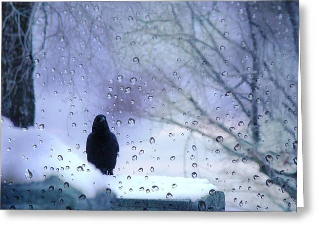 Winter Crows Greeting Cards - Cold Crow Greeting Card by Gothicolors Donna Snyder