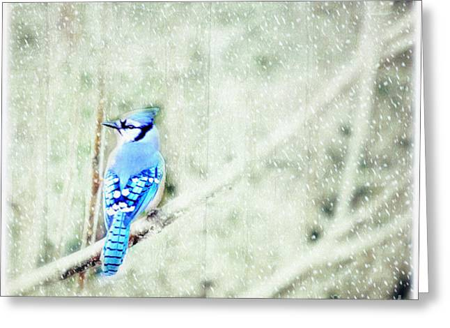 Snow Scene Landscape Greeting Cards - Cold Day For A Blue Jay Greeting Card by Peggy  Franz