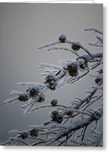 Cold Day Greeting Cards - Cold Day Greeting Card by Kevin Bone